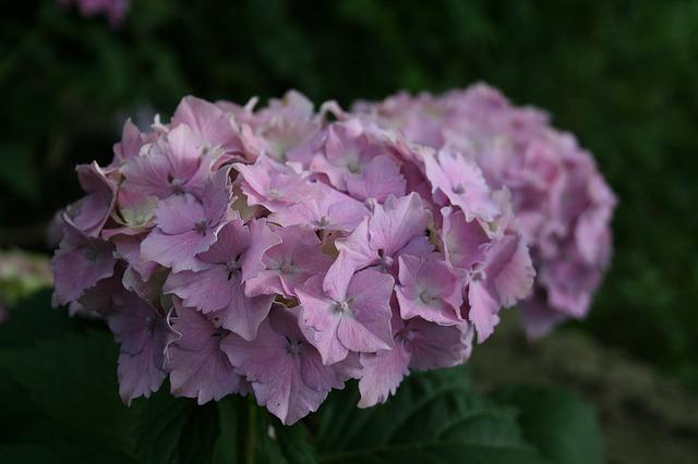 květina.jpg